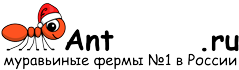Муравьиные фермы AntFarms.ru - Барнаул